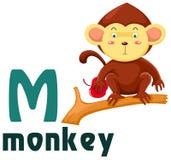 Animal alphabet M. Illustration of isolated animal alphabet M with monkey Stock Images