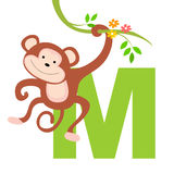 Animal alphabet M. Illustration of alphabet letter M with a cute little monkey isolated on white background. M is for Monkey vector illustration
