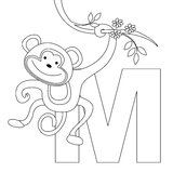 Animal Alphabet M Coloring page. Illustration of alphabet letter M with a cute little monkey isolated on white background. coloring book page graphic M is for royalty free illustration
