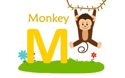 Animal alphabet M.M for monkey. Vector illustration of monkey with letter m isolated on white background.M for monkey Royalty Free Stock Photos