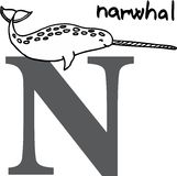 Animal alphabet N (narwhal) Royalty Free Stock Image