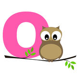 Animal alphabet O. Illustration of alphabet letter O with a cute little Owl sitting on a branch isolated on white background. O is for Owl royalty free illustration