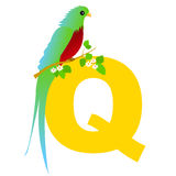 Animal alphabet Q. Illustration of alphabet letter Q with a cute Quetzal isolated on white background. Q is for Quetzal vector illustration