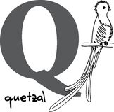 Animal alphabet Q (quetzal) Royalty Free Stock Photo