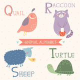 Animal Alphabet. Quail, Raccoon, Sheep, Turtle. Part 5. Vector illustration of cute animals: Quail, Raccoon, Sheep, Turtle. Children education. Animal Alphabet Royalty Free Stock Photos