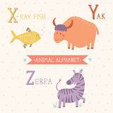 Animal Alphabet. X-ray fish, Yak, Zebra. Part 7. Vector illustration of cute animals: X-ray fish, Yak, Zebra. For children education. Animal Alphabet Stock Photo