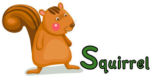 Animal alphabet S for squirrel Royalty Free Stock Photography