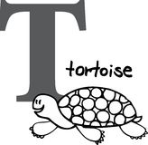 Animal alphabet T (tortoise). Animal alphabet - letter T (tortoise Stock Photography