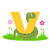 Animal alphabet V. Illustration of alphabet letter V with a cute little viper isolated on white background. V is for Viper stock illustration