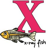 Animal alphabet X (x-ray fish) Royalty Free Stock Image