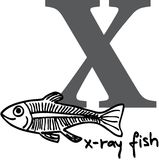 Animal alphabet X (x-ray fish). Animal alphabet - letter X (x-ray fish Stock Photo