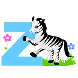 Animal alphabet Z. Illustration of alphabet letter Z with a cute little Zebra isolated on white background. Z is for Zebra vector illustration