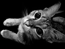 Animal, animal de estimação Fotografia de Stock Royalty Free