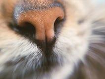 Animal, Animal, Photography, Blur, Royalty Free Stock Photography