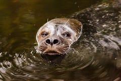 Animal, Aquatic, Brown, Eye, Eyes Royalty Free Stock Photography