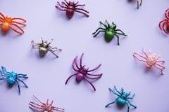 Animal, Arachnid, Artificial stock photos