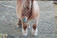 Animal atrás das barras Imagens de Stock