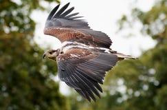Animal, Avian, Beak Stock Image