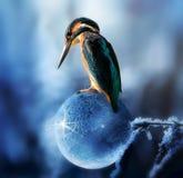 Animal, Avian, Beak stock photos