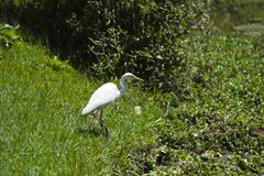 Animal, Avian, Beak royalty free stock photos