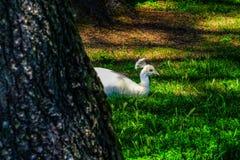 Animal, Avian, Beak Royalty Free Stock Photography