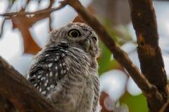 Animal, Avian, Beak Royalty Free Stock Images