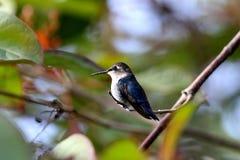 Animal, Avian, Beak Royalty Free Stock Image