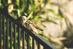 Animal, Avian, Bird Stock Photography