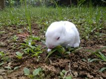 Animal. Baby rabbit eating his food.. He is looking so cute that I cannot resist myself from sharing this pic Stock Photo