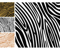 Animal background pattern - zebra skin print Stock Images