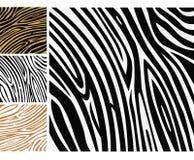 Animal background pattern - zebra skin print Stock Images