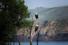 Animal, Beach, Bird, Daylight Royalty Free Stock Photos