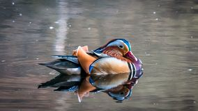 Animal, Beak, Bird Royalty Free Stock Image