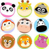 Animal, bear, animal icon Stock Photos