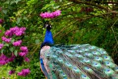 Animal, Beautiful, Bird stock photos