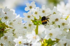 Animal, Bee, Bloom Stock Photography