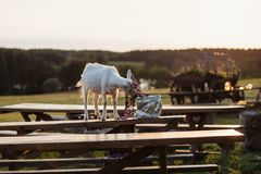Animal, Benches, Blur Stock Images