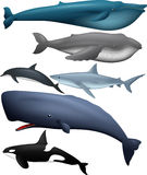 Animal Big Fish Collection Royalty Free Stock Images