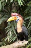 Animal, Bird, Colourful, Eye, Fly Royalty Free Stock Photo