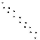 Animal black foots and wildlife animal mammal steps, pet traces. Animal foots silhouette steps Animal foot prints and tracks isola Stock Photos