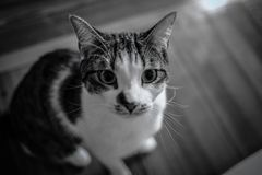 Animal, Black-and-white, Blurred Royalty Free Stock Photo