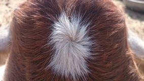 Animal-blanc-entendez l'animal Images stock