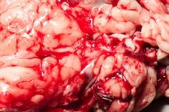 Animal Blood Filled Organs Stock Image