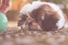 Animal, Blur, Canine royalty free stock images