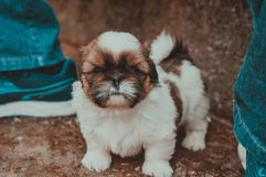 Animal, Blur, Canine, Close-up, stock images