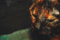 Animal, Blur, Cat royalty free stock photo