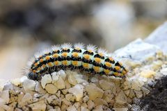 Animal, Blur, Caterpillar Stock Images