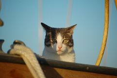 Animal on a boat : cat royalty free stock photo