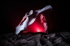 Animal bone in dark Halloween night with fog and light on background / Selective focus and space for text. Abstract horror concept stock images