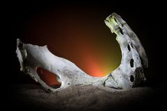 Animal bone in dark Halloween night with fog and light on background / Selective focus and space for text. Abstract horror concept royalty free stock image